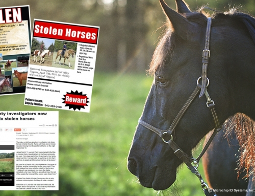 Horse Theft.  How can a microchip help prevent it?