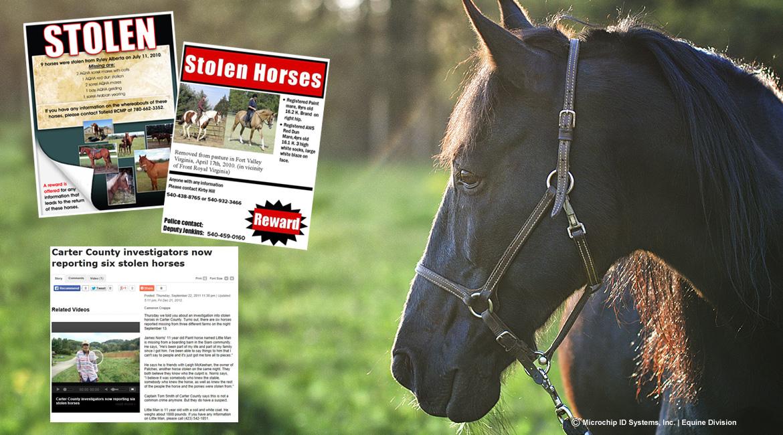 HorseTheft