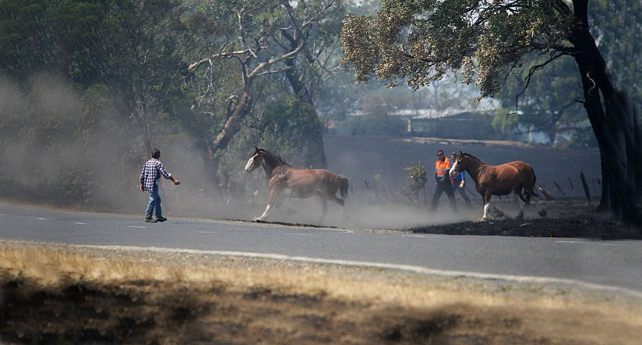 Horses-caught-in-fire