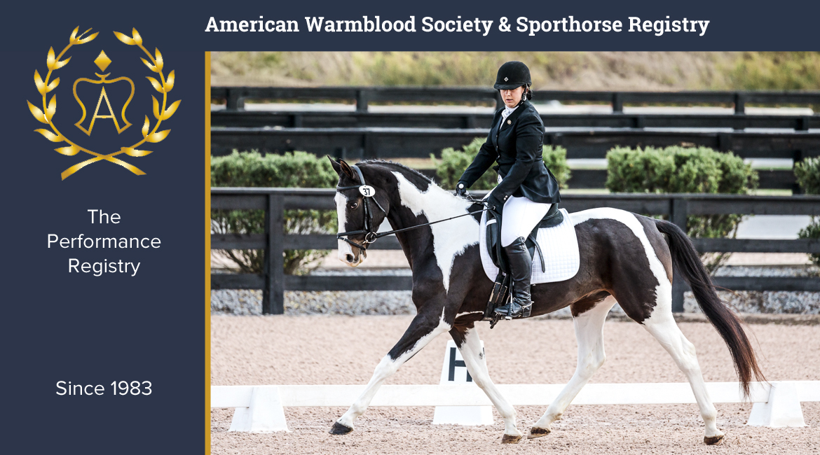 American Warmblood Registry